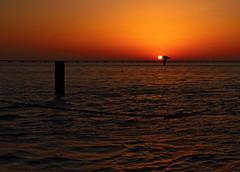The perfect timing (Robyn Hooz (away)) Tags: sun bird water rio canon reflections fly wings lisboa seagull fiume ali volo disk sole acqua gabbiano lisbona uccello alignment tago 550d allineamento efs18135is