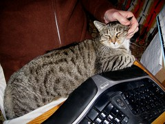 Beck, relaxing on my lap (Hairlover) Tags: pet cats pets public cat kitten kitty kittens kitties hairlover