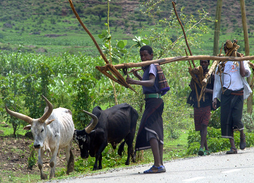 Campesinos cerca de Kombolcha. Camino de Dessie (Etiopía)