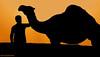 (ANOODONNA) Tags: silhouette canon camel saudi 40d alrasheed alanood العنود الرشيد anoodonna