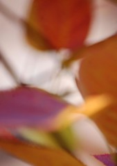 purple red orange gold pink bokeh leaves