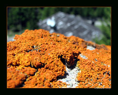 Lichen ( Annieta  Off / On) Tags: italy holiday color nature june juni canon ilovenature vacances vakantie juin italia natuur powershot piemonte lichen s2is farbe colori canonpowershots2is 2009 couleur allrightsreserved itali valledaosta valdaosta kleur korstmos aostavalley valgrisenche annieta aostadal valledaosta usingthisphotowithoutpermissionisillegal 453749n 7354e