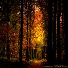 depth (genevieve van doren) Tags: autumn trees light sun leaves forest automne soleil path lumire arbres hdr chemin bois feuilles bellissima magicdonkey flickrsbest