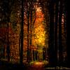 depth (genevieve van doren) Tags: autumn trees light sun leaves forest automne soleil path lumière arbres hdr chemin bois feuilles bellissima magicdonkey flickrsbest
