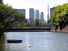Imperial Palace Grounds & Tokyo Tower (CalUrbanist) Tags: japan tokyo kyoto hiroshima nagoya osaka karuizawa matsumoto nagano shinkansen obuse
