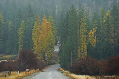 On A Foggy Morning (jimgspokane) Tags: larch tamarack onlythebestare naturewatcher