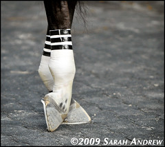 Ready to Race (Rock and Racehorses) Tags: feet shoes bend details aqueduct explore tape hoof shoeing bandage horseshoes hind bandages hooves bends r360wire travelsofhomerodyssey homeboykris ska2725