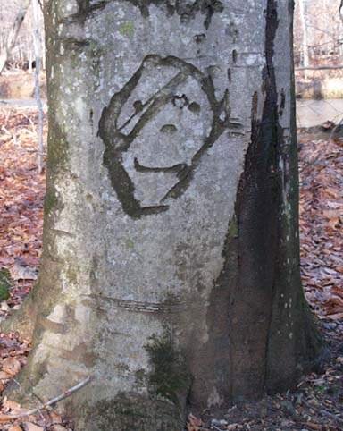 FaceOnTree