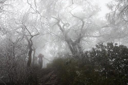 北插天山-霧淞