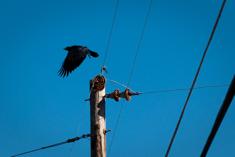 Day 85: As the Crow Flies