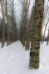beauties (Nieuwe schoenen; ik ben er weer) Tags: trees winter white snow sneeuw 123nature
