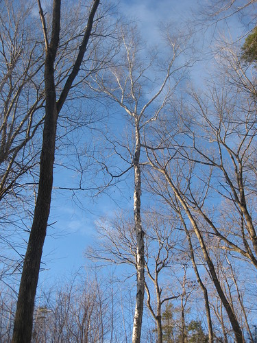 Cobalt Winter Hike
