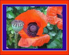 161 (Al Paca1) Tags: flowers kwiaty kolorowe mozaiki filtrowane