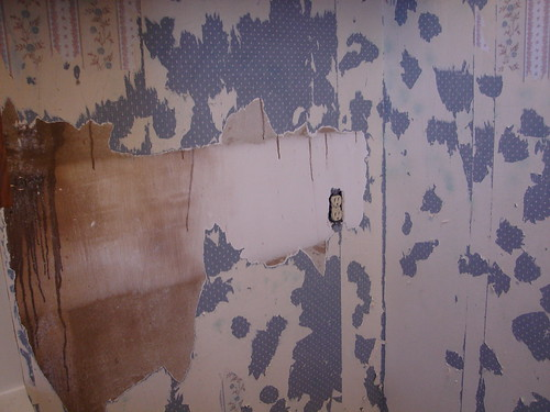 3rd Day of Peeling Wall Paper