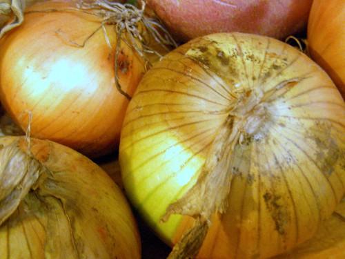 Mat-Su Valley onions