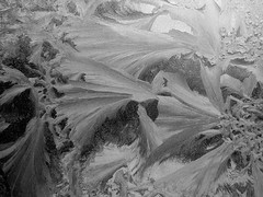Fern Frost I (bluntVisions) Tags: winter cold fern ice window frost frostwork