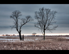 Three Trees (AJBarickman) Tags: trees sunset tree canon illinois dupage naperville prarie springbrook 2470 forrestpreserve 40d springbrookforrestpreserve