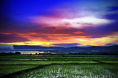 Balige Sunrise ( DocBudie) Tags: sunrise morninglight lowlight batak laketoba balige tourismdestination northsumatra batakhouse sumaterautara paddifields visitlaketoba2010 kunjunganwisata