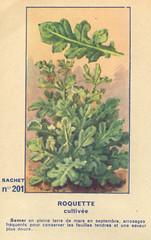legume201 roquette