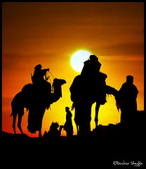 Camels Silhouettes ! (Bashar Shglila) Tags: world city sunset sun mountain mountains silhouette festival photography gallery photos top silhouettes best most worlds popular libya camels libyan ghat kaf libyen explored lbia libi libiya anawesomeshot colorphotoaward liviya libija      lbija  lby libja lbya liiba livi   ejjnoon mygearandmepremium mygearandmebronze mygearandmesilver mygearandmegold