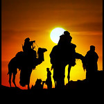 Camels Silhouettes !