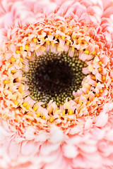 Perhaps I'm old and tired, but I always think that the chances of finding out what really is going on are so absurdly remote that the only thing to do is to say hang the sense of it and just keep yourself occupied. (Seven_Seas_Photography) Tags: pink flower macro canon gerbera afp thecafe themacrogroup
