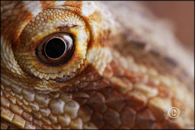 Drake's eye.