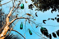 Bottle Tree !