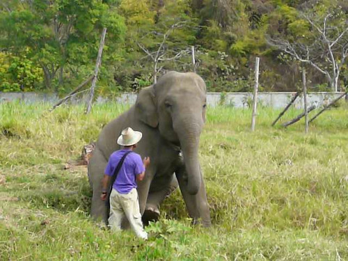 Hope the naughty boy with the bell and his mahout
