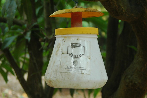 Pheromone trap to control insects & flies