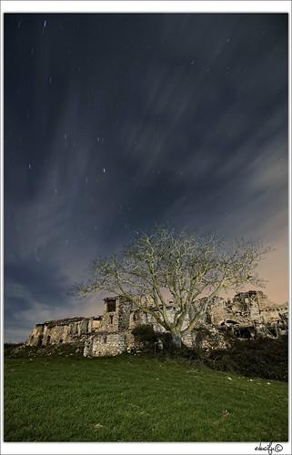 Startrails del árbol de gallicant