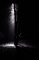 And there was... Light I (Johan Gustavsson) Tags: trees blackandwhite bw göteborg sweden gothenburg sverige träd svartvit nikkorsauto35mmf28 nometering andtherewaslight nikond90 nikkors35mmf28 nikoncapturenx2