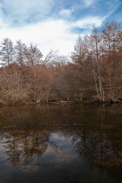 Teal Pond  © 2010 Bo Mackison