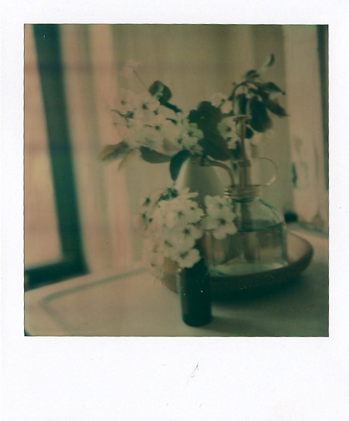 bradford pear blossom 1