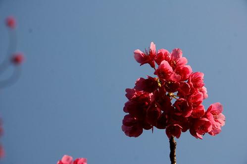 Florecitas rojas