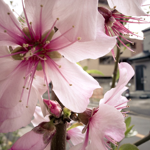 Spring Madness FIreworks