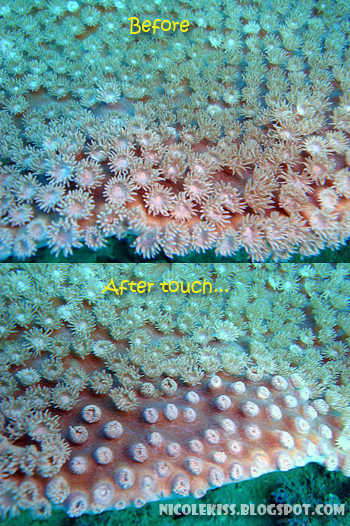 coral before and after touch