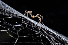 Cave Spider (Robbie Shone) Tags: wild expedition lamp rock dark underground outdoors lights dangerous explorer helmet rope adventure explore torch sarawak malaysia borneo limestone cave exploration cavern rappel abseil headtorch colorimage gunungmulunationalpark caver largestcavesintheworld