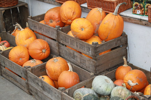Pumpkins in Royal Hill