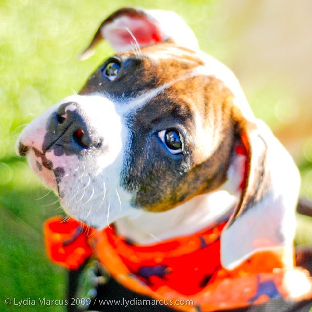 Haute Dog Howl'oween-11