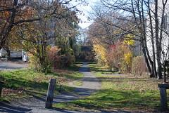 Heading West from Marblehead (photoman82) Tags: railroad autumn trees fall abandoned ma marblehead path massachusetts newengland foliage trail bm railtrail abandonedrailroad bostonandmaine lostrailroad