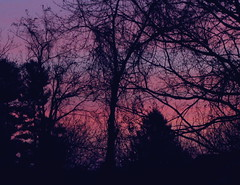 Early Morning Beauty (jrix) Tags: morning trees sky silhouette quote quotation pictureperfect nov09 theenchantedcarousel throughthediningroomwindow
