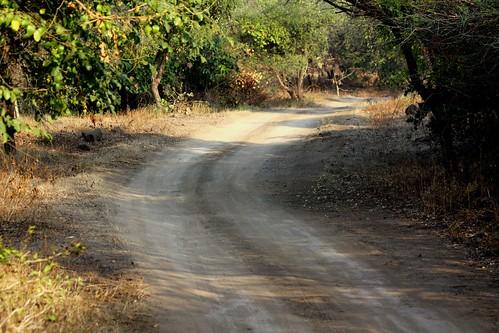 Low 2009-11-29 Sasan Gir - 01 Safari 04