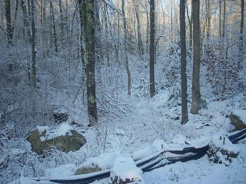 Snowy Sunday 1