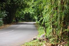 IMG_2144 (Cak-cak) Tags: road bali indonesia bamboo bambu klungkung sidemen iseh