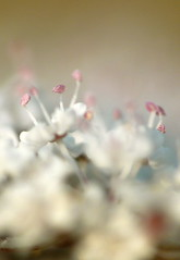 Nurserie (alpha du centaure) Tags: macro fleur architecture plante photographer photos picture images pistil panasonic flou grosplan photographe visuels vgtal photosofart lumixpanasonic naturalphotos dmcfz18 alphaducentaure photosartistique stephanemarechal photosdenature photosdart photosartistic fleursetpaysages tripleniceshot
