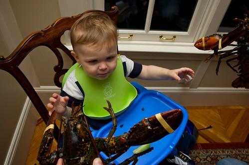 get that lobster!