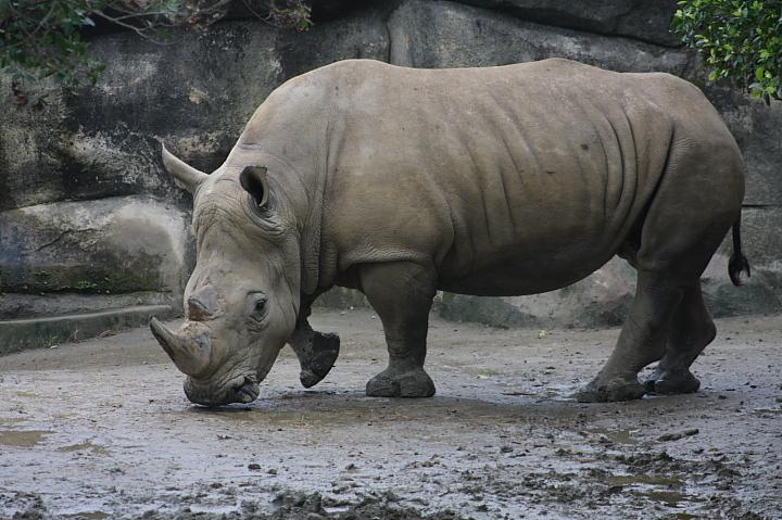 2009木柵動物園0019