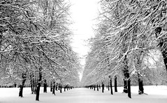 LIme Tree Avenue at Rufford Country Park (DaveKav) Tags: uk greatbritain schnee trees winter england blackandwhite snow cold day unitedkingdom britain snowy hiver freezing olympus gb neige rufford nottinghamshire brrr e510 fourthirds ruffordcountrypark limetreeavenue thebigfreeze frozenmidlands frozenbritain pwwinter