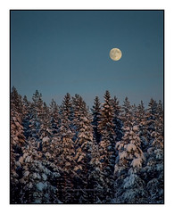 Fro #419 (mats.fjellner) Tags: moon snow cold night forest kyla noche sweden nieve luna bosque skog sverige sn frio natt suecia mne kall abetos hlsingland granar kallt kilafors